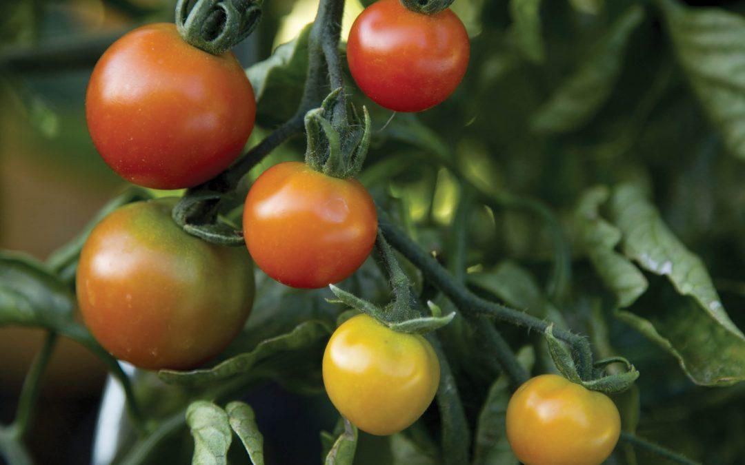 Improving Plant Disease Resistance Can Nanoparticles Deliver – Dr Wade H Elmer