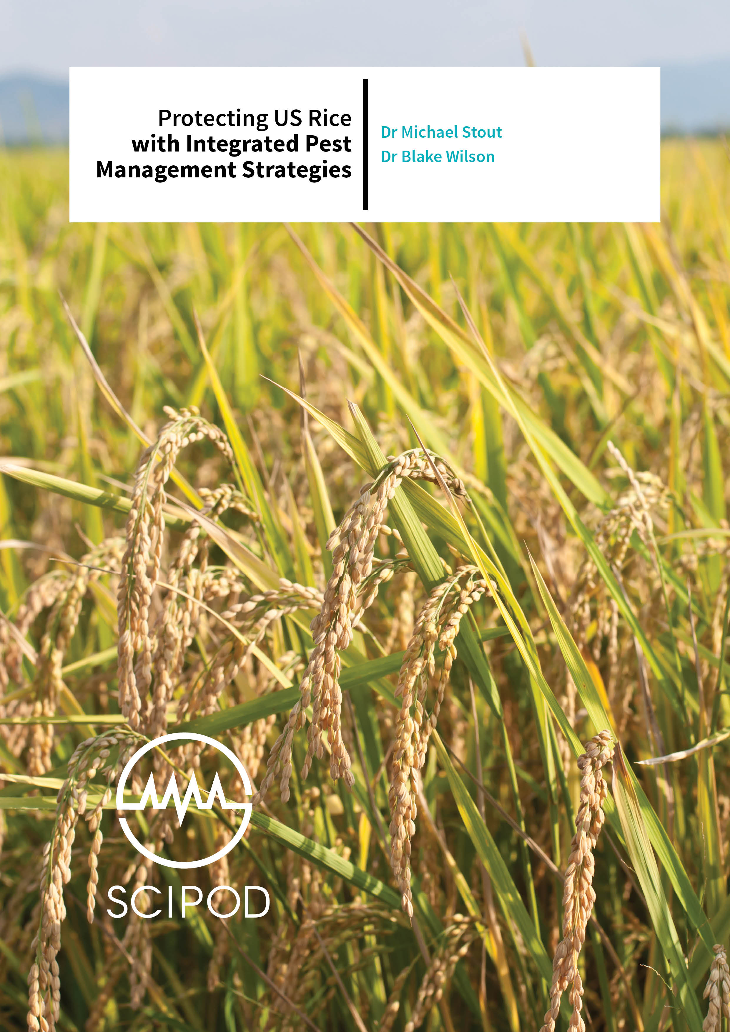 Protecting US Rice with Integrated Pest Management Strategies – Drs  Michael Stout and Blake Wilson, Louisiana State University