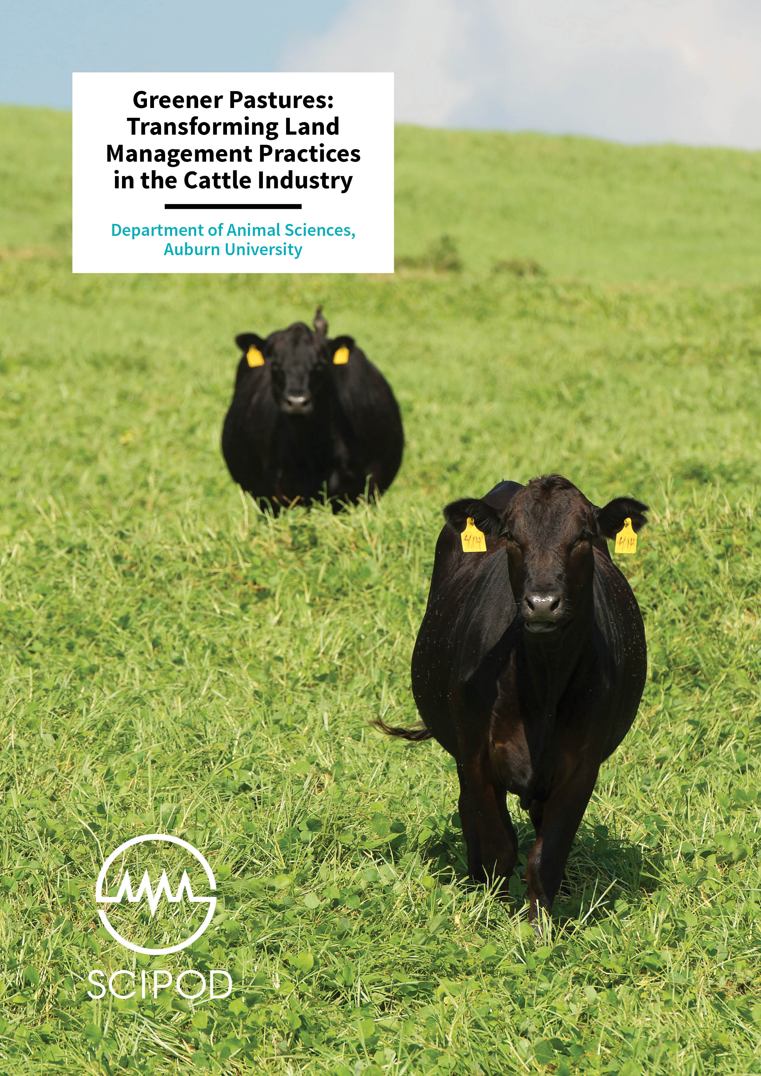 Greener Pastures, Transforming Land Management Practices in the Cattle Industry – Department of Animal Sciences, Auburn University