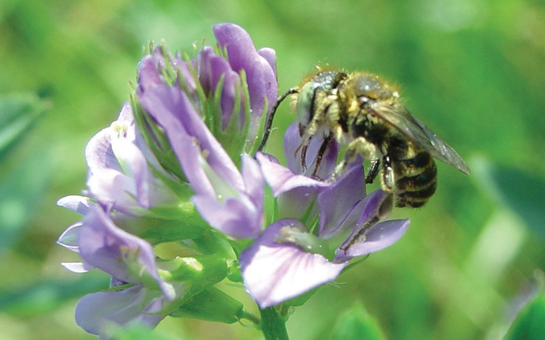 Buzzing & Blooming, Bee-Flower Interactions in Crop Production – Professor Johanne Brunet, USDA-ARS Vegetable Crops Research Unit