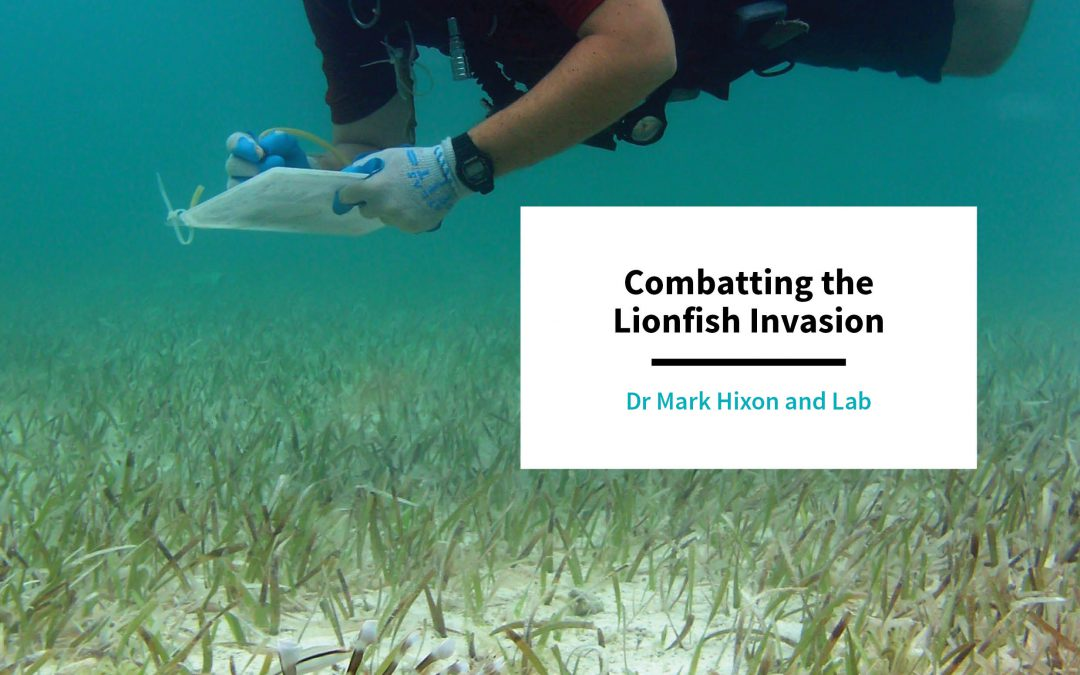 Combatting the Lionfish Invasion – Dr Mark Hixon and Lab, University of Hawaii