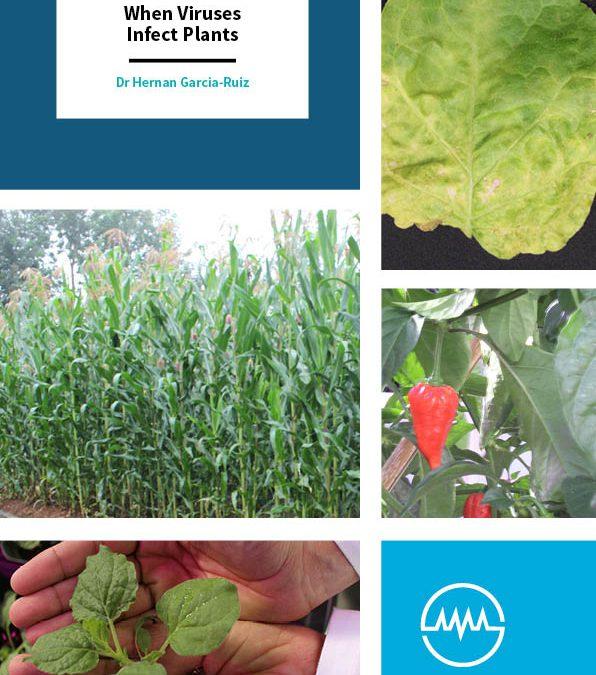 When Viruses Infect Plants – Dr Hernan Garcia-Ruiz, University of Nebraska