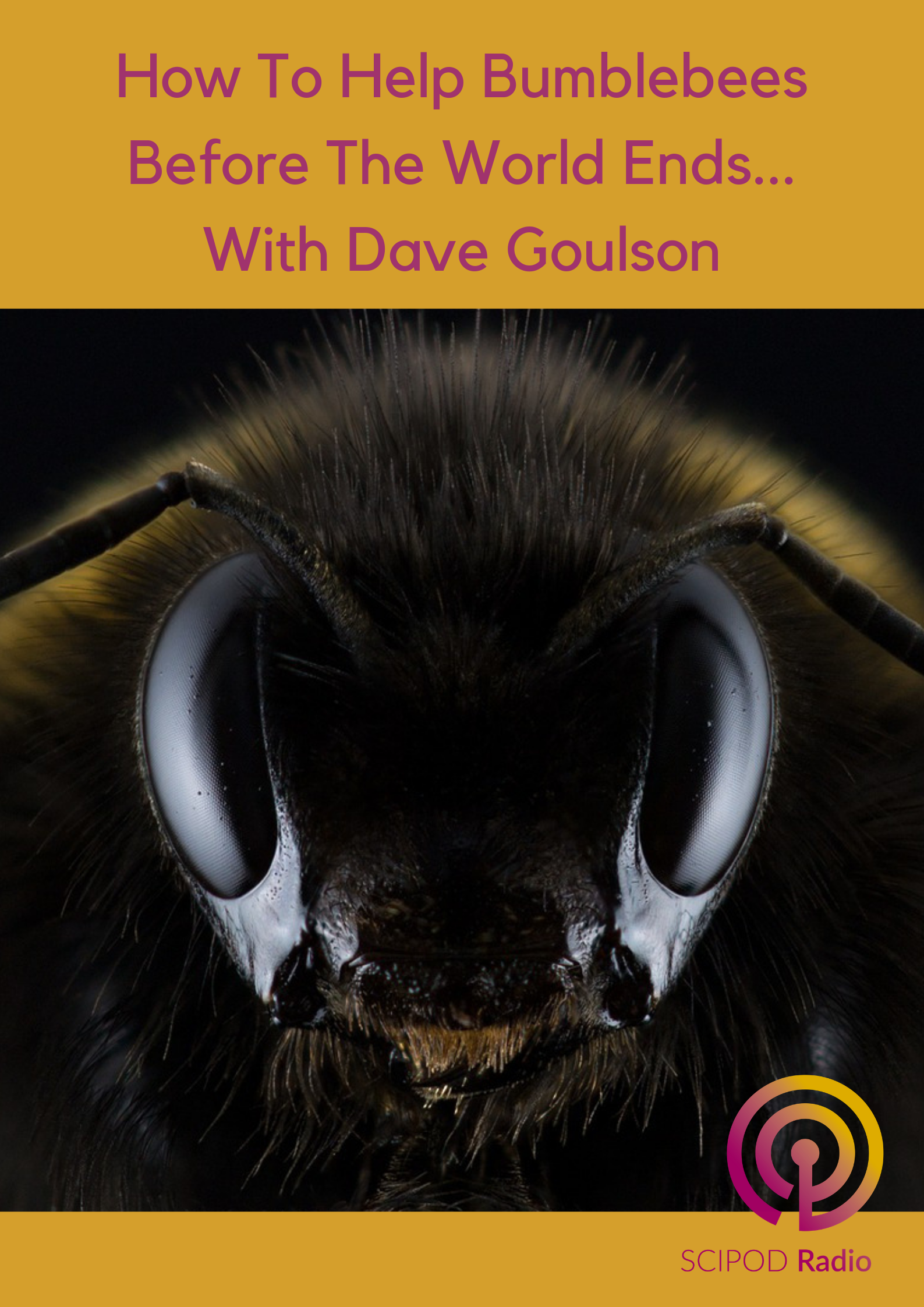 How To Help Bumblebees Before The World Ends… With Dave Goulson