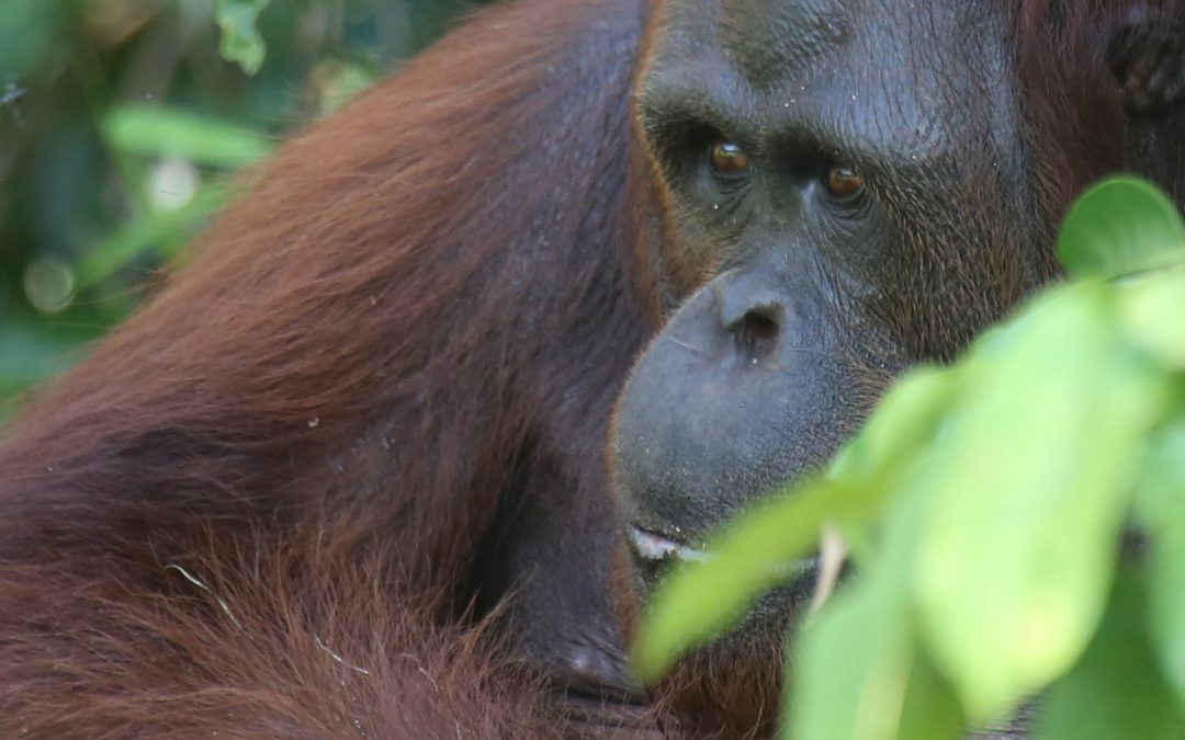 Unsustainable global consumer demands drive primate extinction – Dr Alejandro Estrada and Dr Paul A Garber