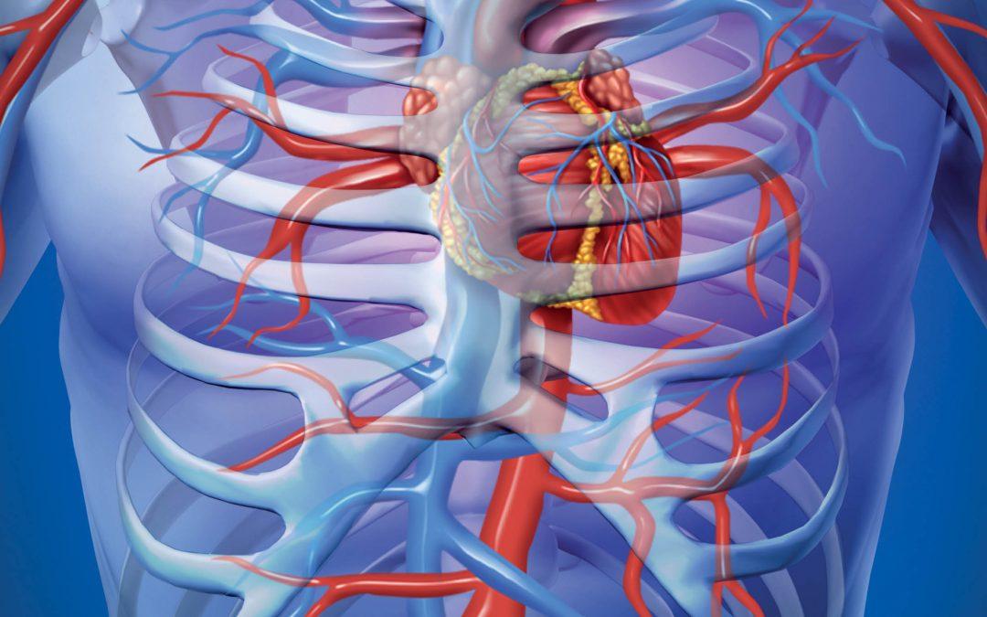 Immune Control of Initiation and Progression of Atherosclerosis – Dr Elena V Galkina, Eastern Virginia Medical School