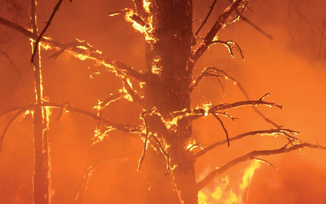 Understanding Wildfire Effects to Inform Better Forest Management – Dr Bianca Eskelson, University of British Columbia