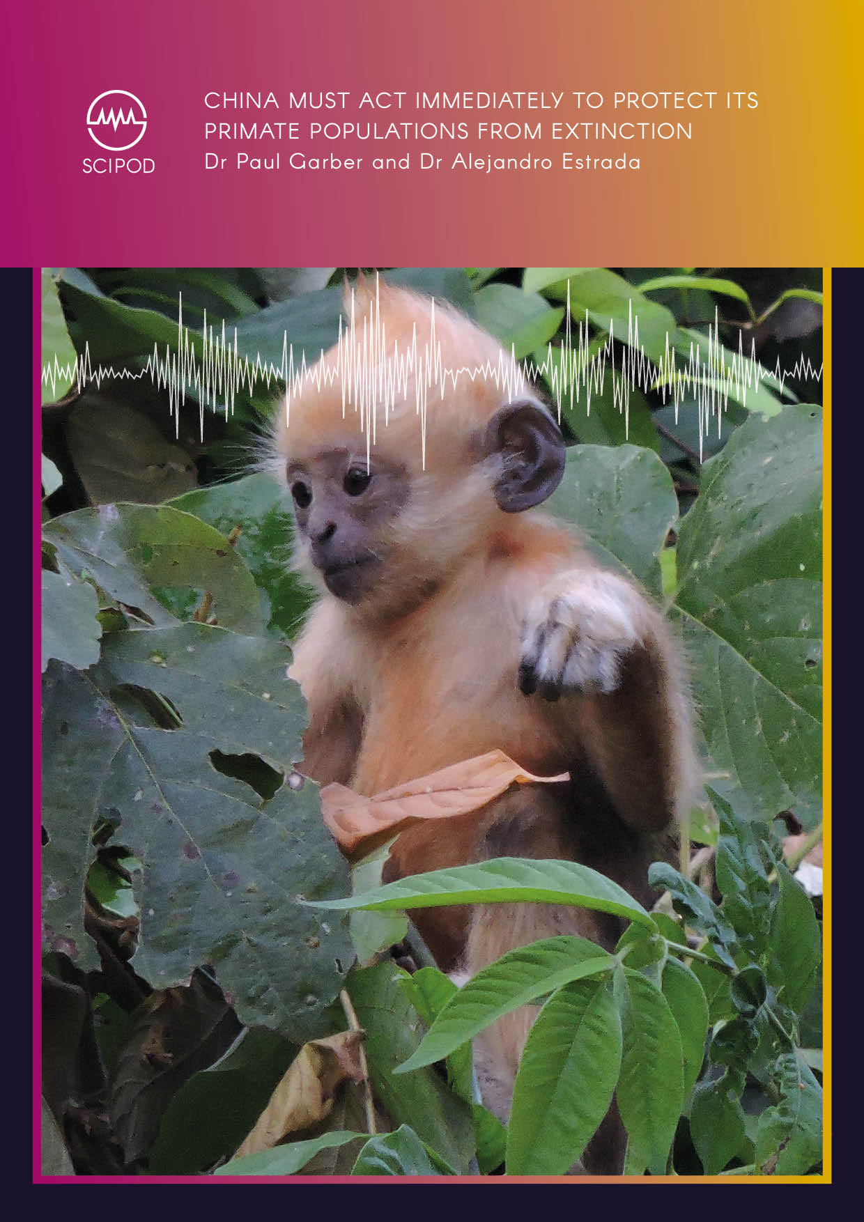 China Must Act Immediately to Protect its Primate Populations from Extinction -Dr Paul Garber  and Dr Alejandro Estrada